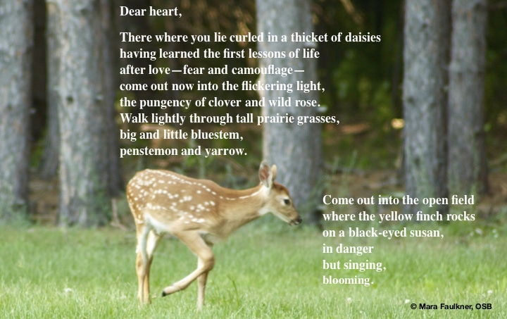 "Dear heart: a ""Light"" poem by Mara Faulkner"